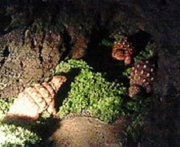 2009/09/07 10:15 アンキロザウルス