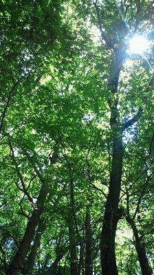 2011/ 7/ 2 12:48 頭上には木漏れ日