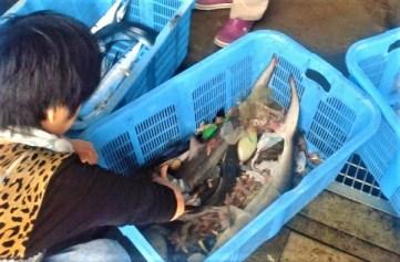 2012/10/28 9:23 以布利漁港にて雑魚を漁る
