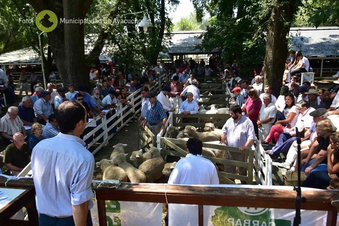 2019 2 expo ovinos