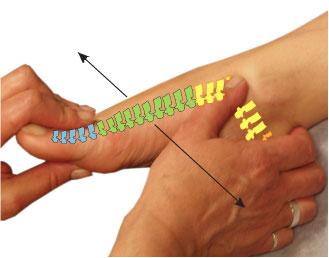 足の甲に脊椎がまるまる反射されているのです。