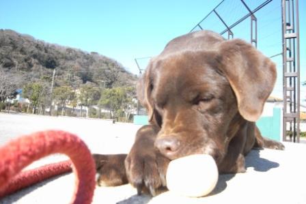 2009年1月5日。大好きなお兄ちゃん、トモと一緒に野球。
