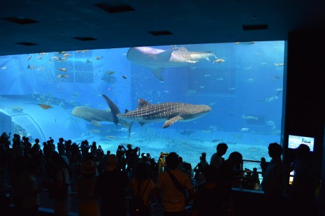 Whale Shark -Okinawa Churaumi Aquarium