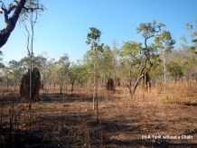 6m tall cathedral termite mounds at Kakadu National Park