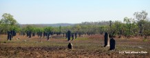 The magnetic termite mounds at Litchfield