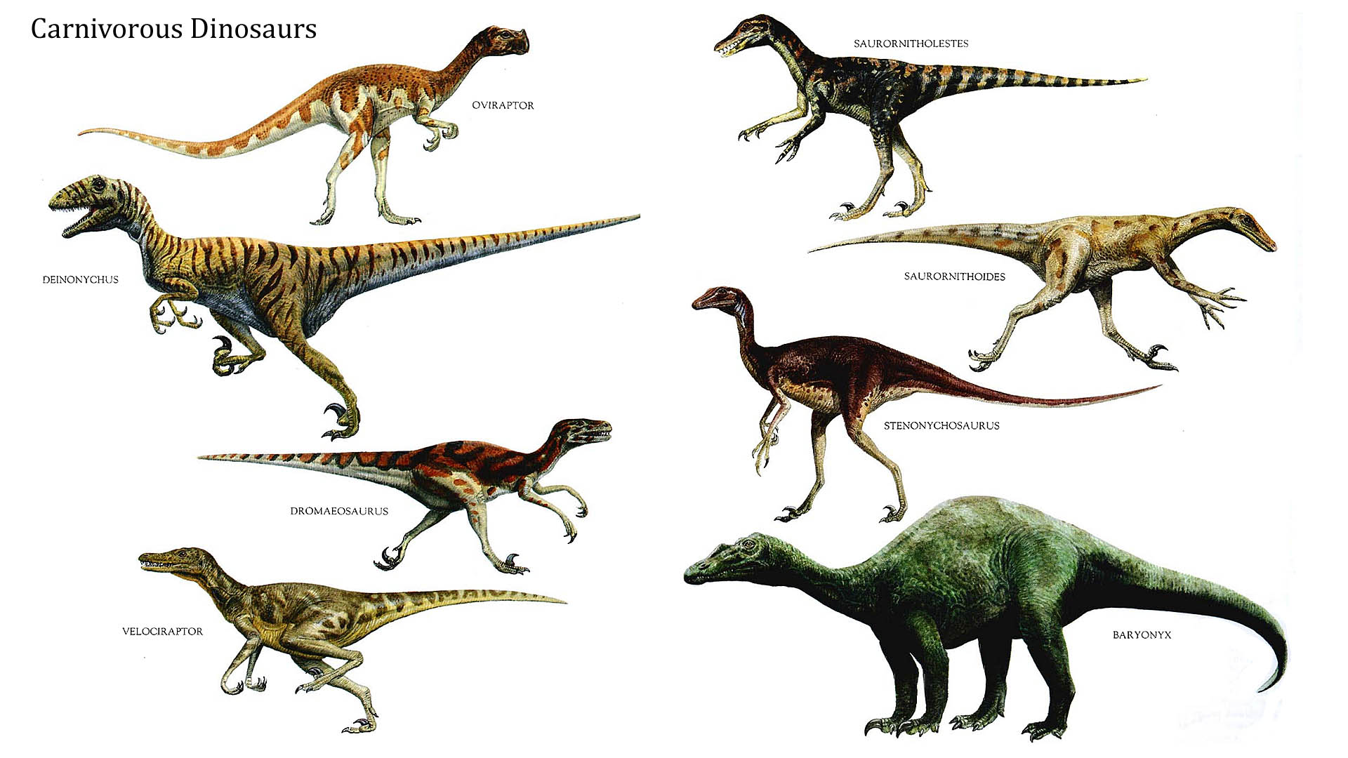 Images About Dinosaur Theme Images
