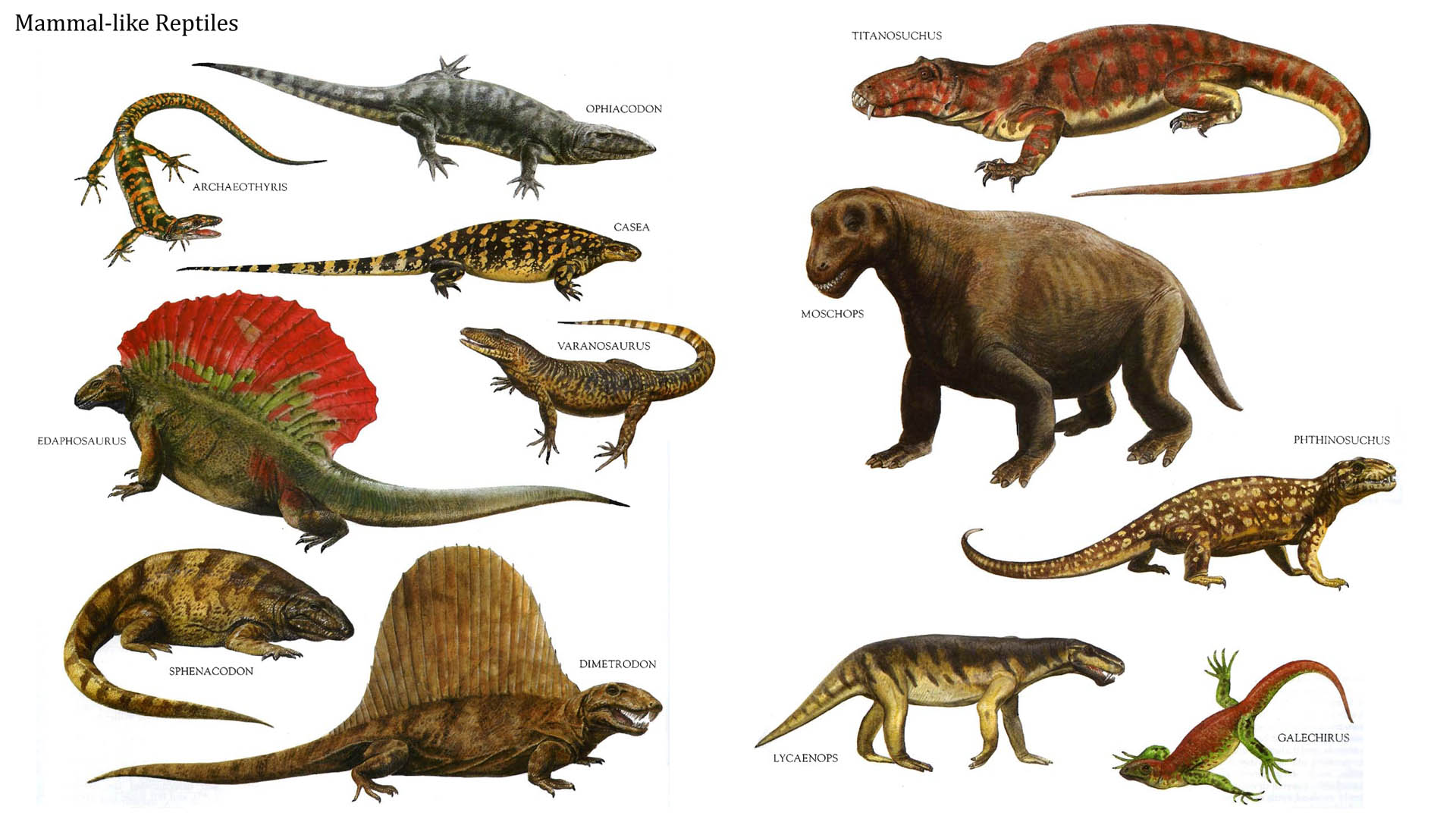 If Dinosaurs Were More Like Birds Than Reptiles Does This