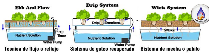Hidroponia-Raices en sustrato-cultivo hidroponico-aydoagua