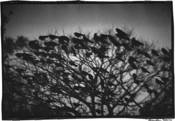 Masahisa Fukase-The Solitude Of Ravens-A Year In The Country-2b