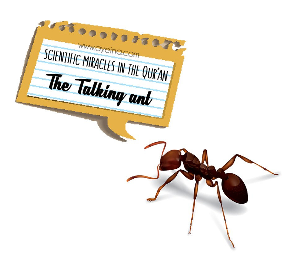 How Did the Ant Speak to Sulaiman (AS)?
