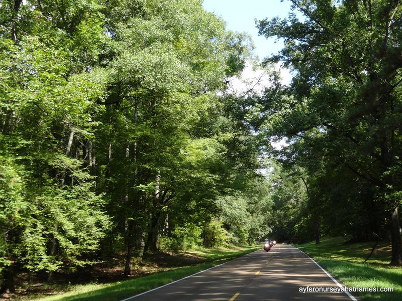 Natchez Trace Parkway4