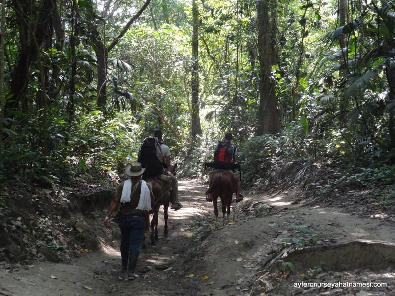Tayrona Milli Parkı orman içinde yürüyüş...