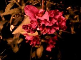 fleurs des champs mauves6