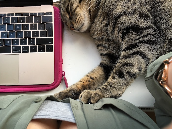Ayla loves life #15 - bloggen