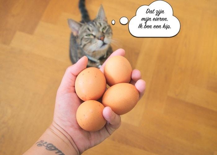Monty met zijn eieren