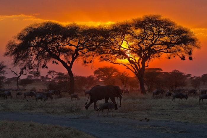 Droomreis: Tanzania en Kenia