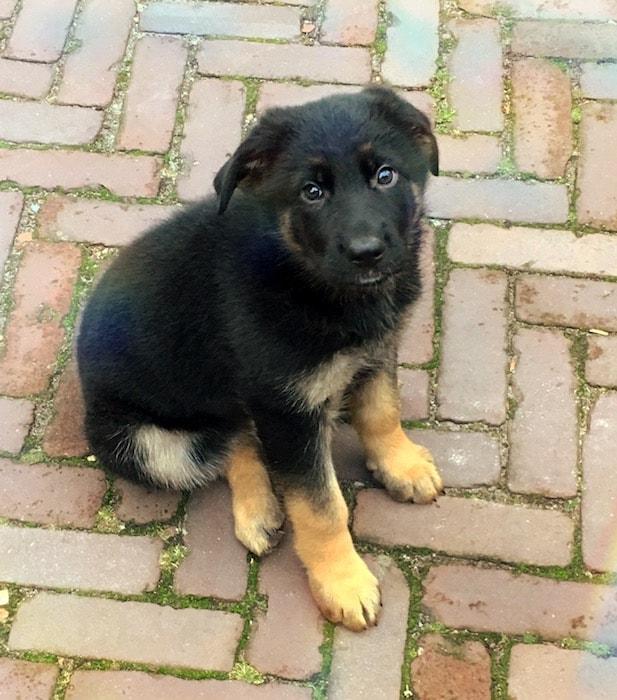Lola: de puppy, de control freak en de burn-out