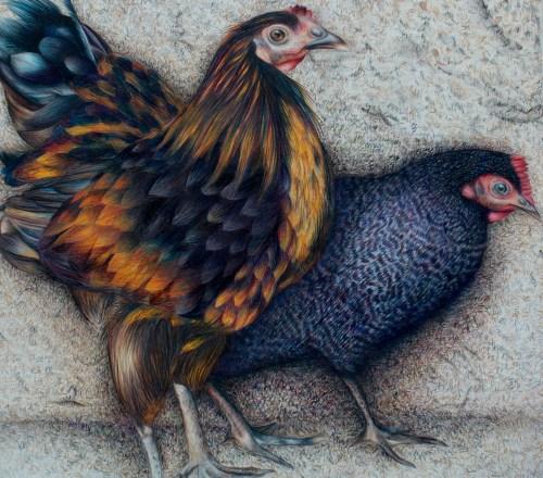 AYLUS_Art_Chicken_Strut