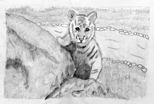 AYLUS_Art_Roderick_Li_Baby_Tiger