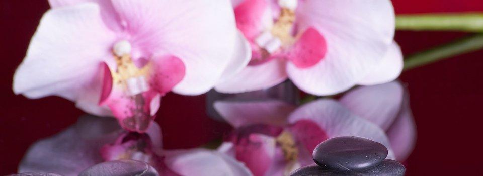 Slider Orchidee rosa Stein