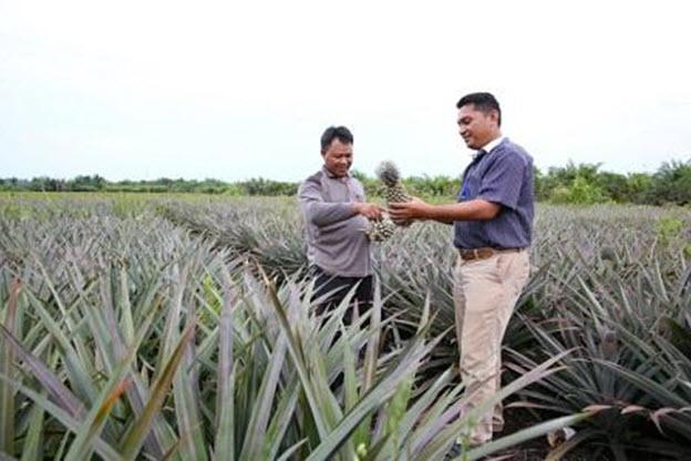 Unit Bisnis Royal Golden Eagle Mengajari Petani Cara Bertani yang Tepat
