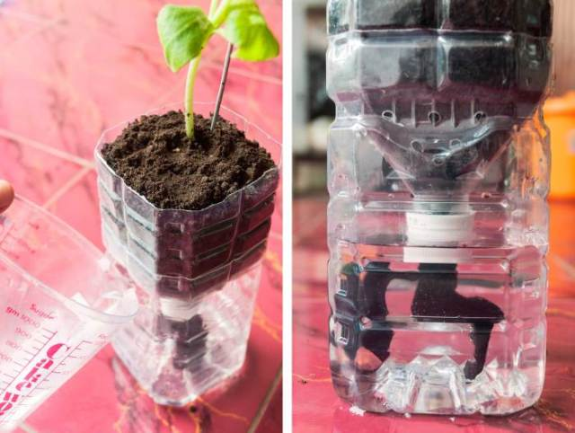 Once your plant is comfortable in its new home water it by pouring water through the watering hole. Notice the water line should be at least as high as the bottle cap.