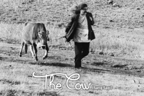 Ayorek Events - Klab Sinema Atap The Cow