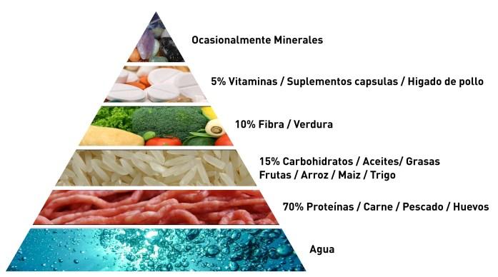 piramide nutrientes perro