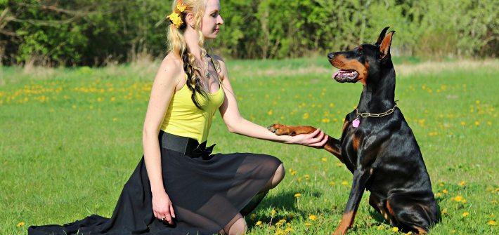 aragon respeto hacia los animales