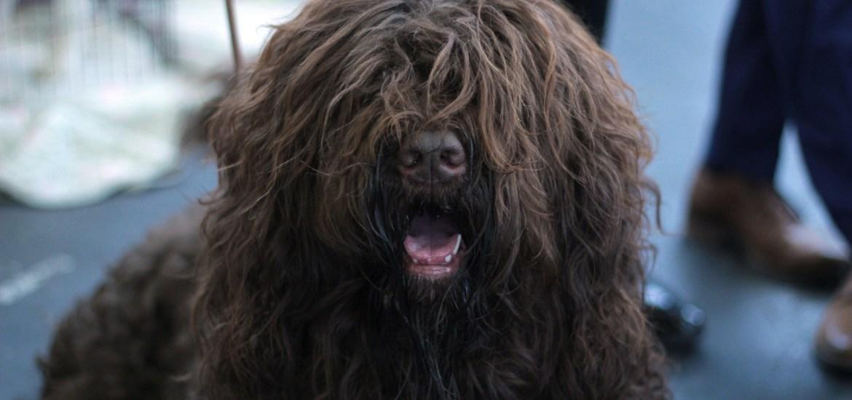 eliminar los pelos de perro