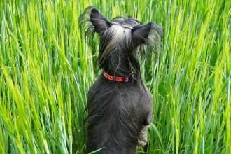 riesgos de rapar a tu perro