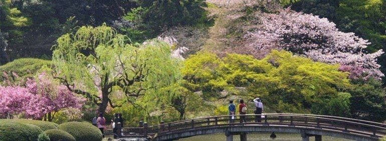 Hokkaido Cherry Blossoms. Foto : jnto.org.au