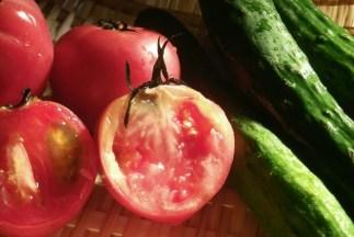 トマトとキュウリ