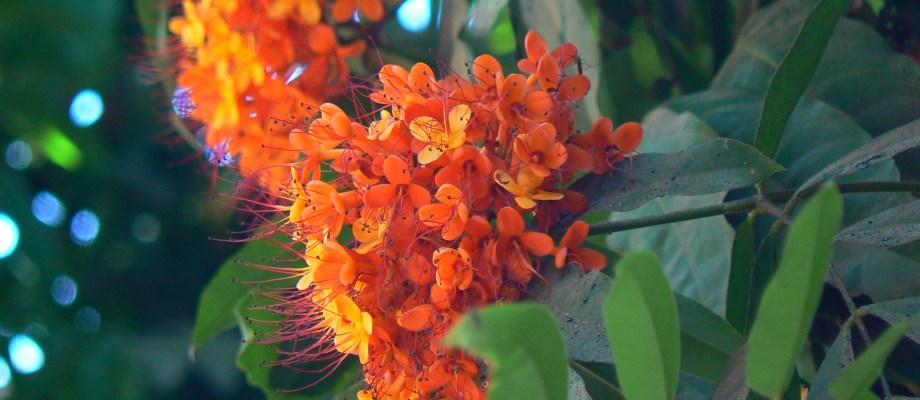 Ashoka Tree: Amazing Benefits