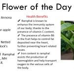 Ramphal Benefits