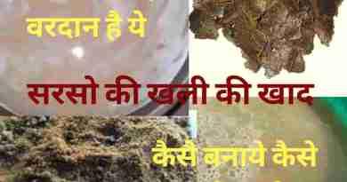 3 type musturd cake fertilizer (Sarso khali ki khad)