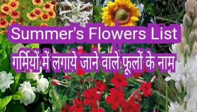 27 summer flower list
