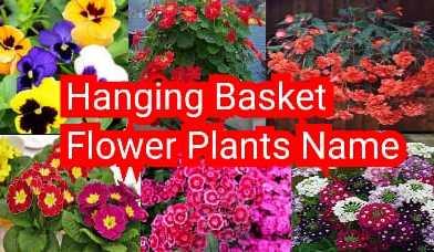 hanging basket flower plant