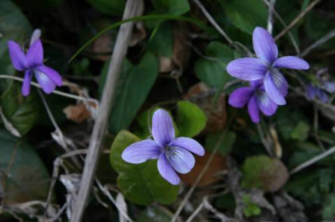 4 Everyday Spring Cleansing Herbs