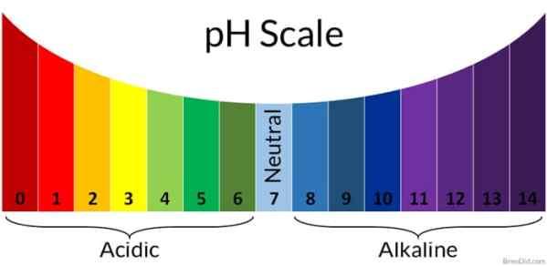 शरीर का pH संतुलन