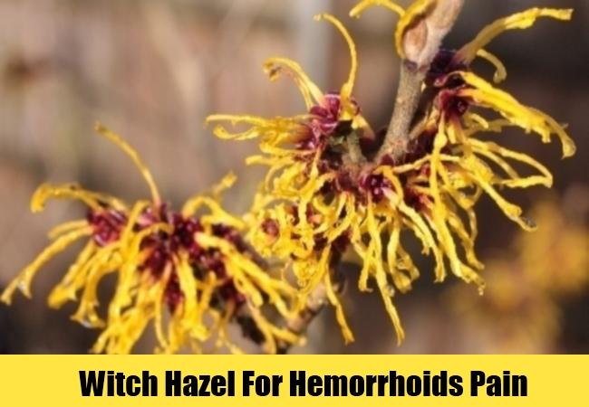 Witch Hazel For Hemorrhoids Pain