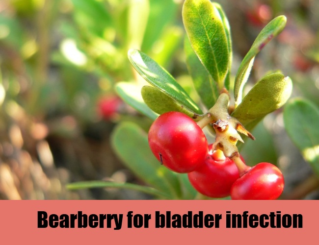 Bearberry For Bladder Infection