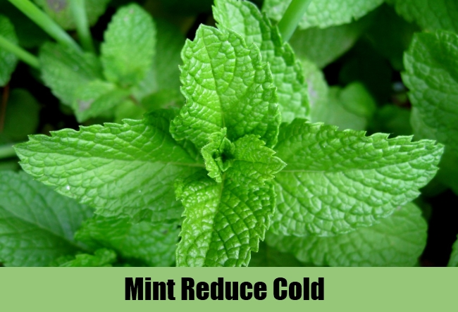 Mint Reduce Cold