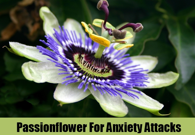 Passionflower For Anxiety Attacks