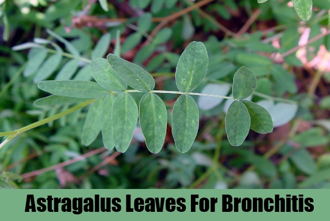 Astragalus Leaves For Bronchitis