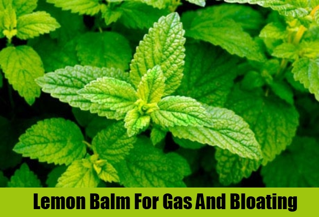 Lemon Balm For Gas And Bloating