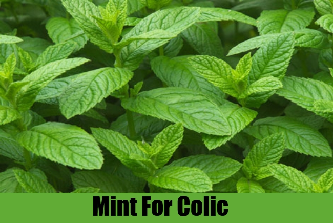 Mint For Colic