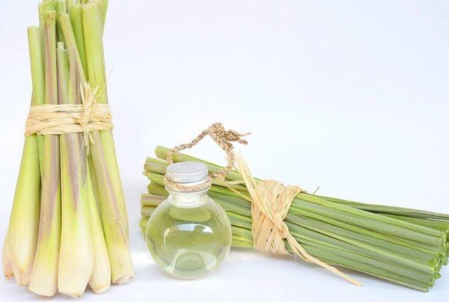 Use Lemongrass Oil