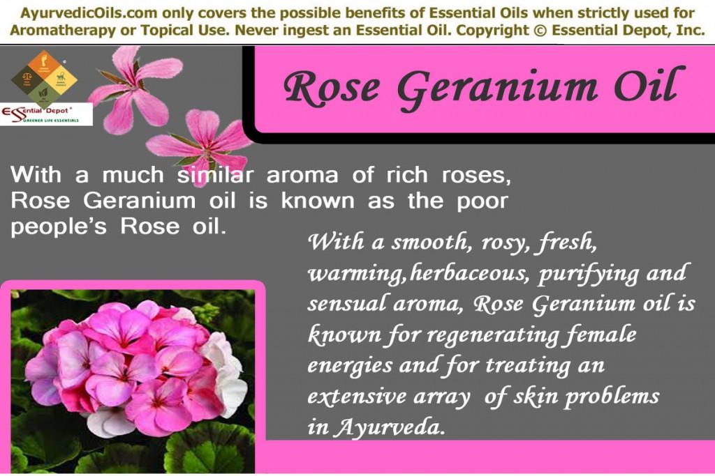 Ayurvedic Health Benefits Of Rose Geranium Oil Essential Oil