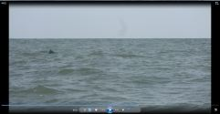 Dolphin view :)